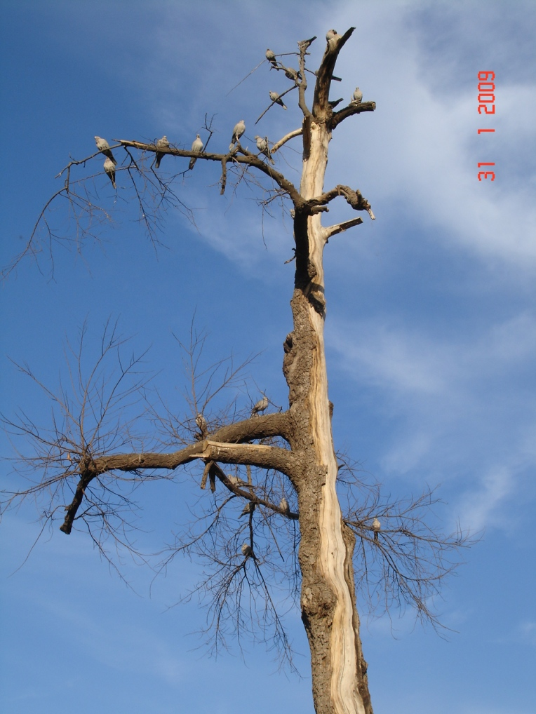 A starving dying tree with birds to add to the spooky look.