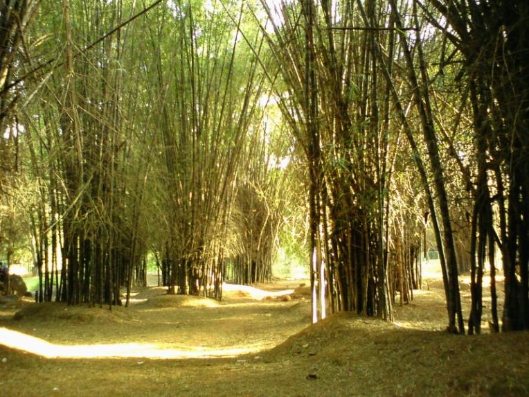 Bamboo Cubbon Park Bangalore
