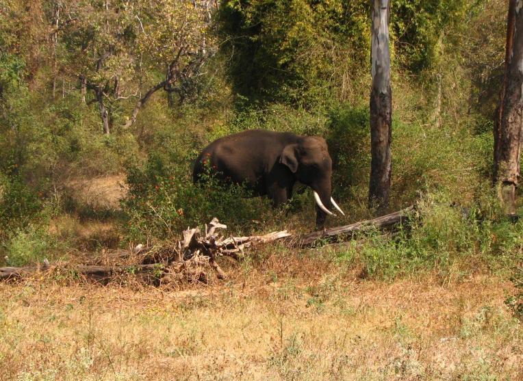 Elephants are large land mammals and karnataka state animal