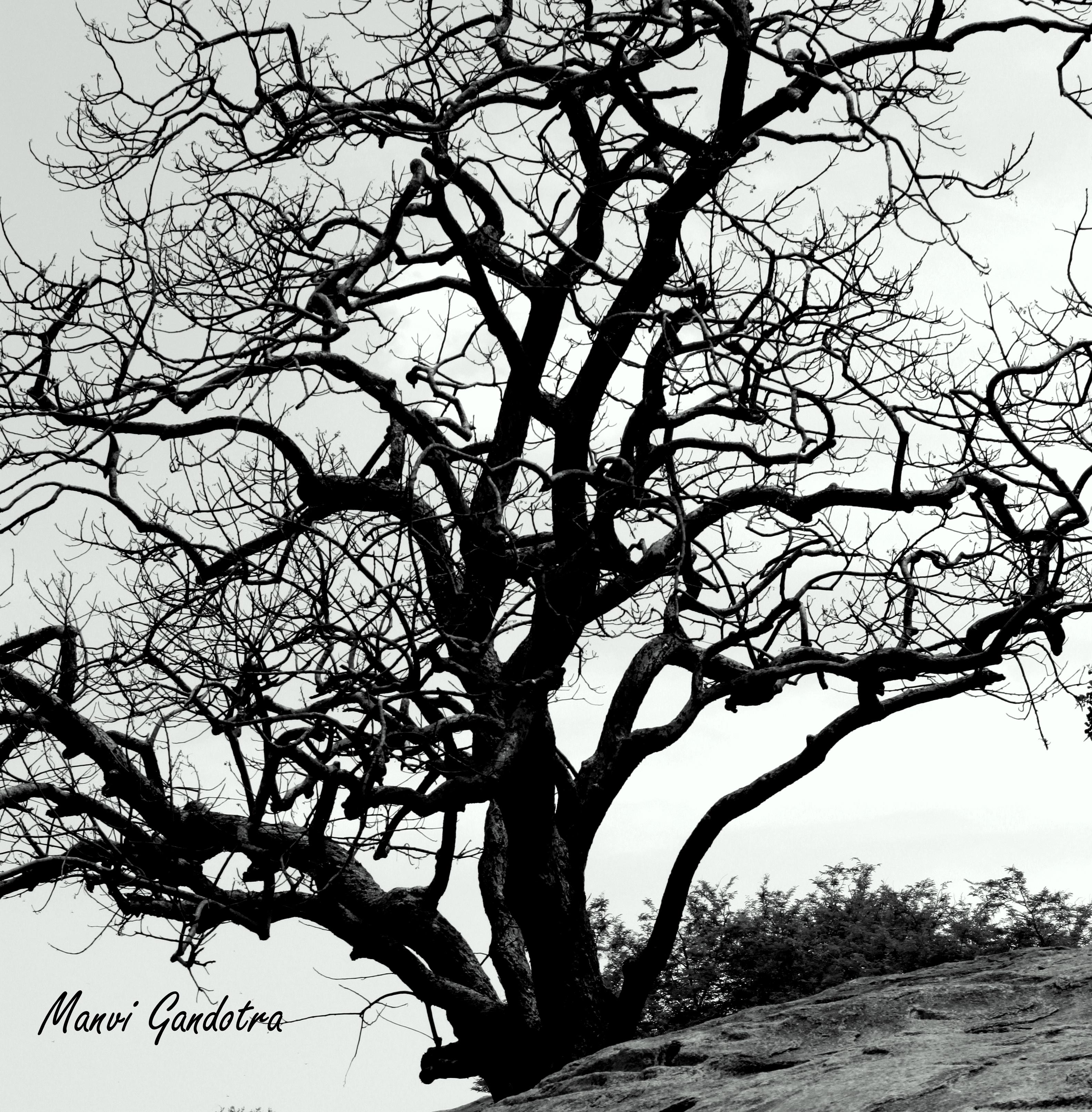 spooky tree noisy pilgrims