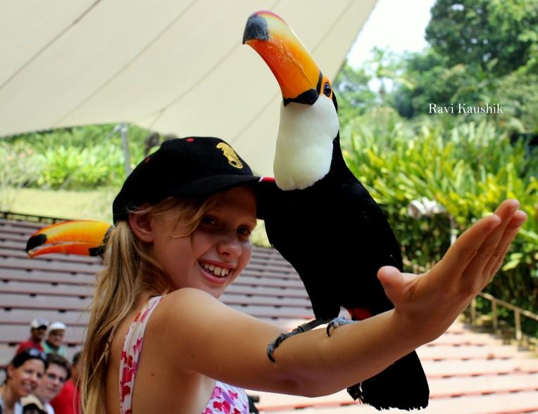 jurong bird park kid child bird show