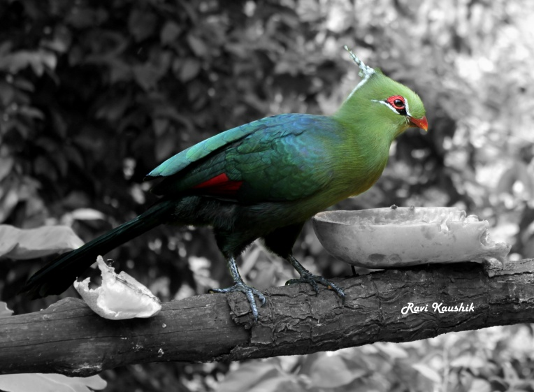 Jurong Bird Park Africa