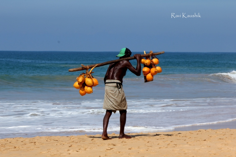 Hikkaduwa sri lanka coconut
