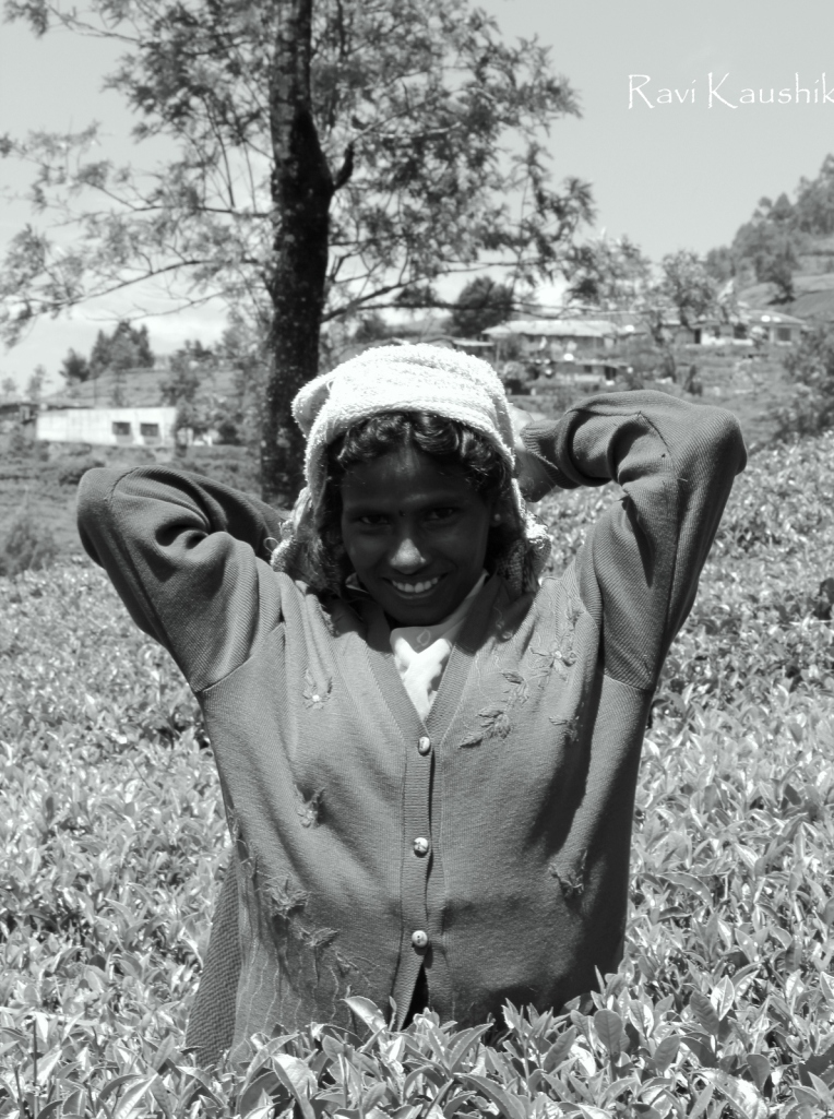 Nuwara Eliya sri lanka tea picker