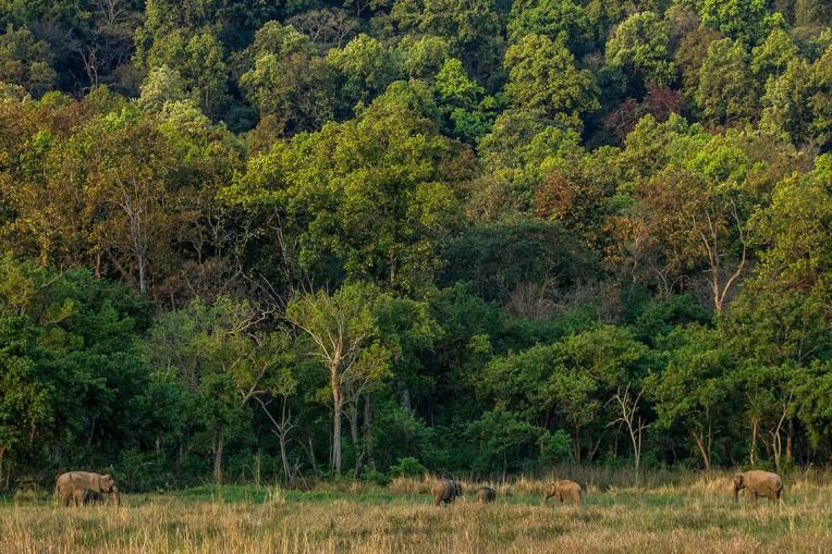 Madhusudan H V_Elephantscape